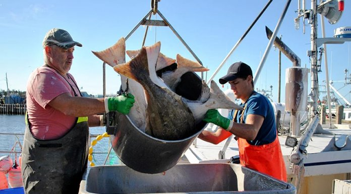 NS-halibut-offload-pic