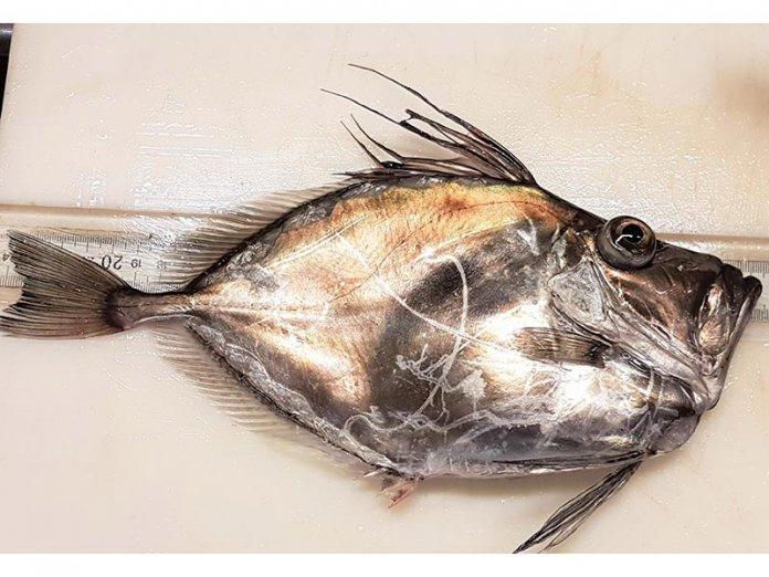 FA-Summer-Survey-Pic-1-Amer.JohnDory2017