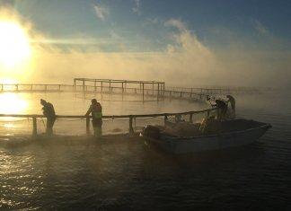 NB-SA-salmon-farm-pic